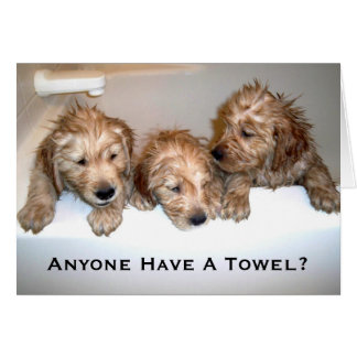 Anyone Have A Towel? Card