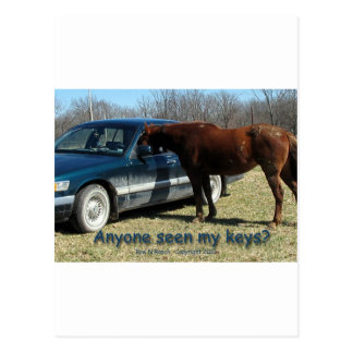 Anyone seen my keys? Car and Horse Humor Postcard