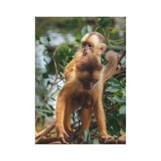Ape-young on the back of the mother canvas print