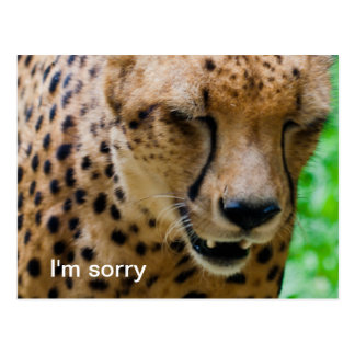 Apologetic Cheetah Postcard