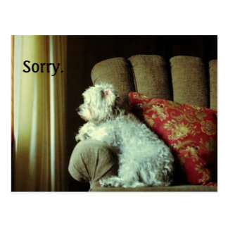 "Apology card~when ""sorry"" says it all. postcard"