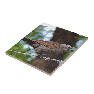 Apostlebird on barb wire square tile