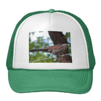 Apostlebird on barb wire trucker hat