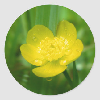 Appalachian Buttercup Stickers