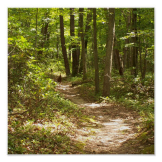 appalachian trail wild turkeys poster