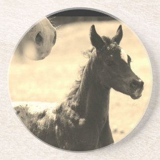 Appaloosa Foal Coaster