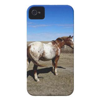 Appaloosa horse on summer prairies Case-Mate iPhone 4 cases