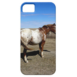 Appaloosa horse on summer prairies iPhone 5 cover