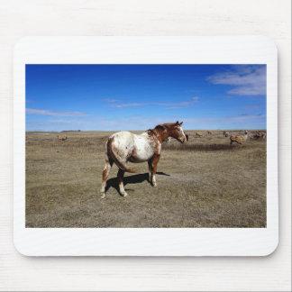Appaloosa horse on summer prairies mouse pad