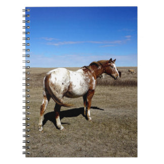 Appaloosa horse on summer prairies spiral notebook