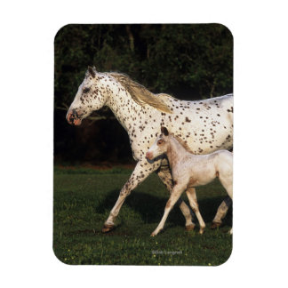Appaloosa Mare And Foal in Field Rectangular Photo Magnet