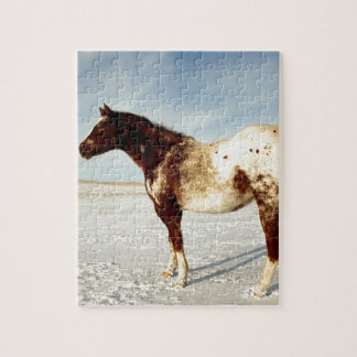 Appaloosa Mare in Winter Snow Jigsaw Puzzle