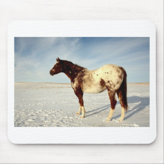 Appaloosa Mare in Winter Snow Mouse Pad