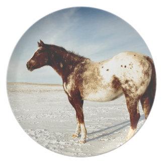 Appaloosa Mare in Winter Snow Plate