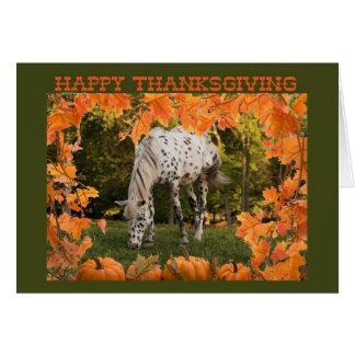 Appaloosa Thanksgiving Card