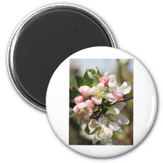 Apple blossom 2 inch round magnet
