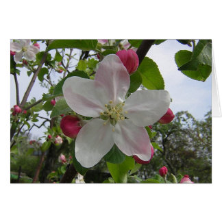 Apple Blossom and Facts Card