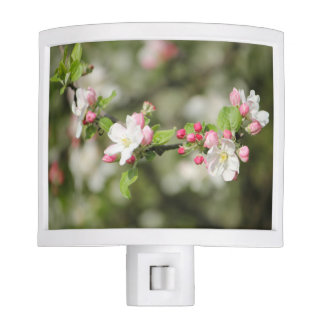Apple Blossom Branch Night Lights