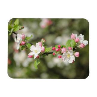 Apple Blossom Branch Rectangular Photo Magnet