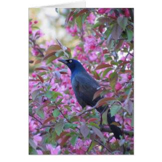 Apple Blossom Grackle Card