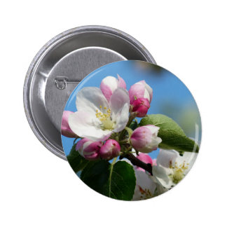 Apple blossom in Spring 2 Inch Round Button