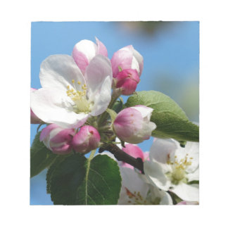 Apple blossom in Spring Notepad