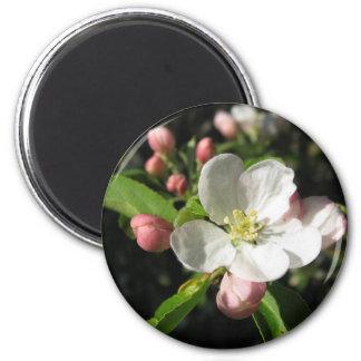 Apple Blossom Refrigerator Magnets
