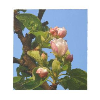 Apple blossom still closed, blue sky notepads