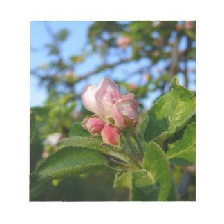 Apple blossom still closed notepads