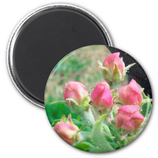 Apple Blossoms 2 Inch Round Magnet