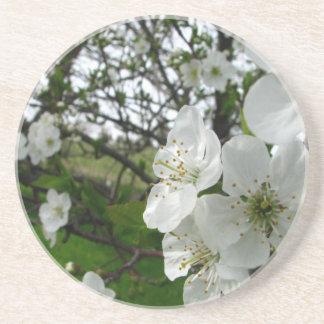 Apple Blossoms Coaster