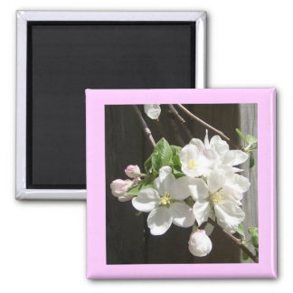 Apple Blossoms & Flowers Square Magnet