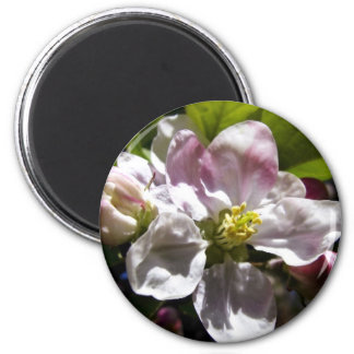 Apple Blossoms Magnet