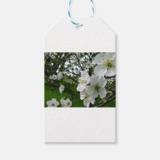 Apple Blossoms Pack Of Gift Tags