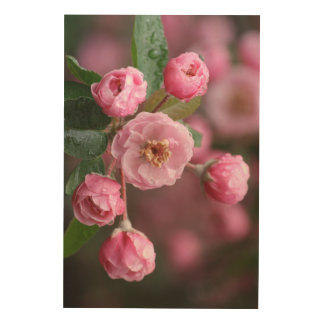 Apple Blossoms Wood Wall Art