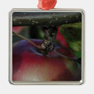 Apple Hanging From a Branch Silver-Colored Square Ornament