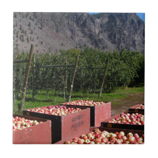 Apple Harvest ib southern BC, Canada Ceramic Tile