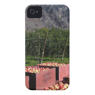 Apple Harvest ib southern BC, Canada iPhone 4 Cover