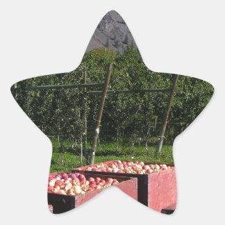 Apple Harvest ib southern BC, Canada Star Sticker