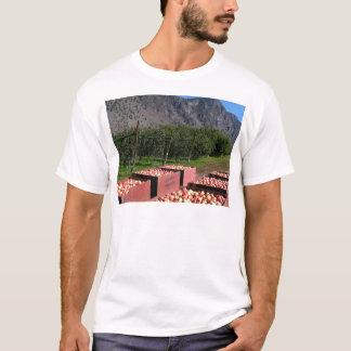 Apple Harvest ib southern BC, Canada T-Shirt