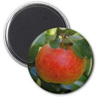 Apple James Grieve magnet