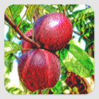 Apple Of My Eye Colour Drawing Square Sticker