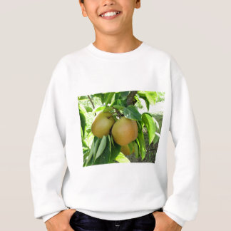 Apple pear on tree branches sweatshirt