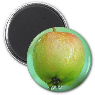Apple Pigeon Magnet