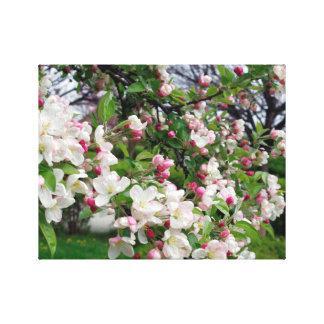 Apple tree bloom. canvas print