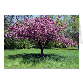Apple Tree Blossoming Card