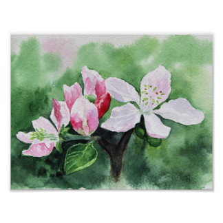 Apple tree flower poster