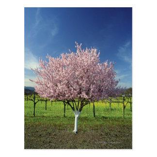 Apple tree in a field, Napa Valley, California, Postcard