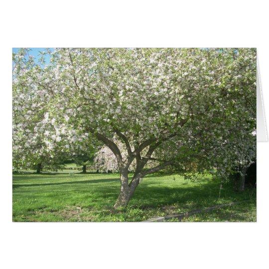 Apple Tree in Bloom Card
