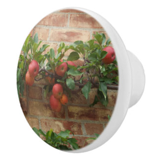 APPLES GROWING ON BRICK WALL ESPALIER CERAMIC KNOB